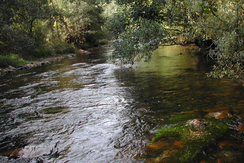 estudios hidrobiologicos